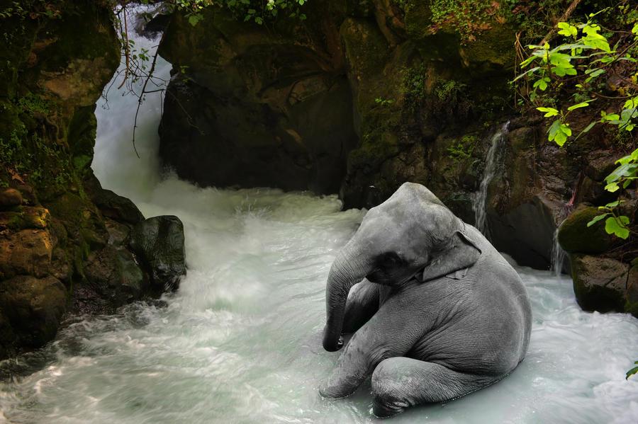 An Effervescing Elephant by ahermin
