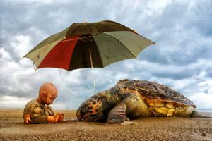turtle's day dream
