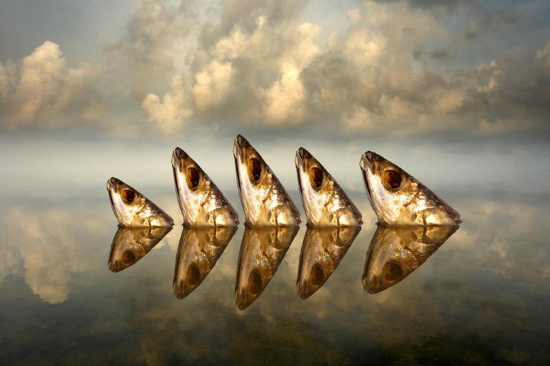 Big Fish by ahermin
