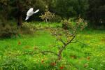 Spring, Eden by ahermin