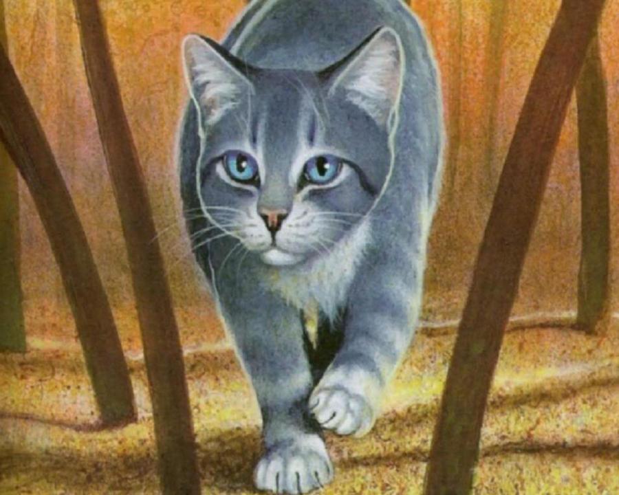 Silverclaw Warrior Cats