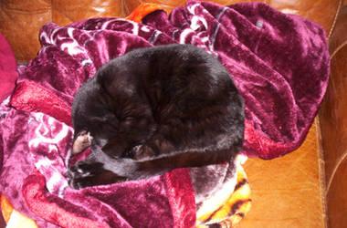 Kitty Snoozing by laprasking