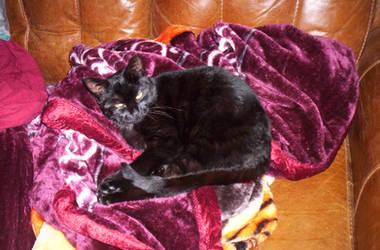 Kitty Woken by laprasking