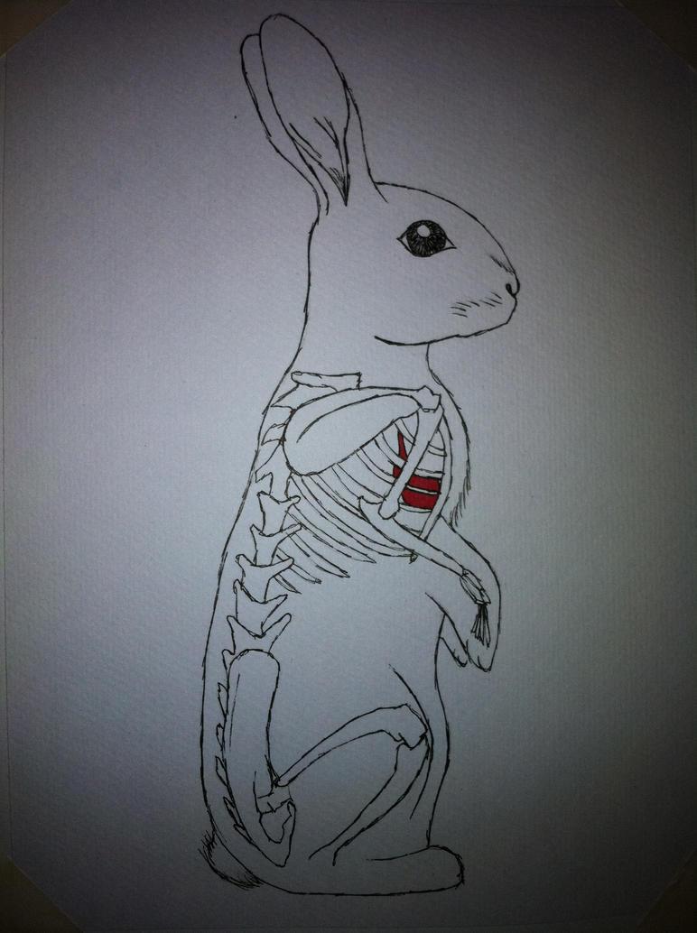 Anatomy Rabbit \'CL\' by Compulsive-Arts on DeviantArt