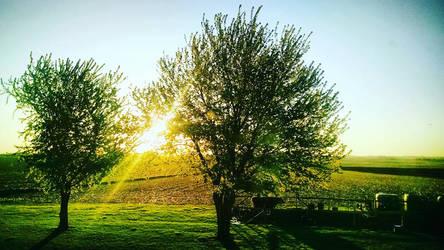 Sun Peeking Through The Leaves by GrungePhotography