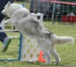 Dog 195