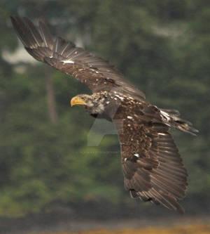 Eagle 227