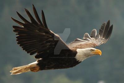 Eagle 270