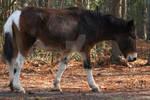 Mule 28