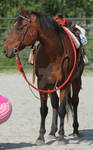 Horse 242