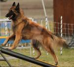 Dog 1325