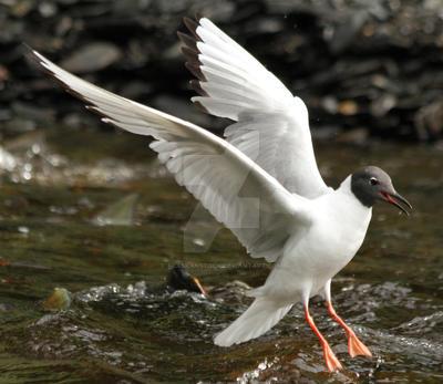 Tern 50 by AlaskanStock