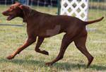 Dog 1939