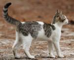 Cat 84