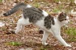 Cat 54