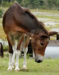 Mule 114