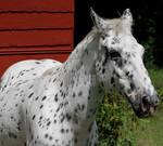 Horse 425