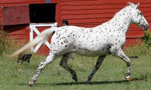 Horse 413