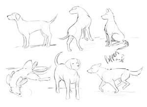 Pupper Practice