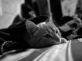 Ezio Sleeps by scardi48