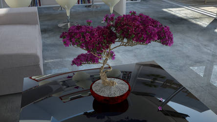 Home Bonsai