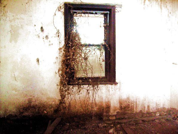 Prozori koji govore Window_2_by_MyBeautifulSuiiciide