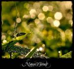 Nature's  Jewels