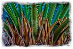 Saga Palm Macro photo