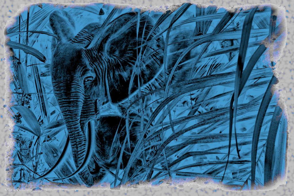 The Elephants Blues