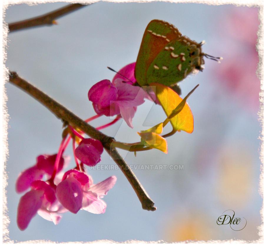 Beautiful Butterfly 111