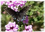 Beautiful Butterfly 11
