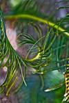 Saga Palm Fron 3