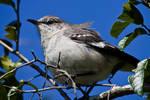 South Texas Bird