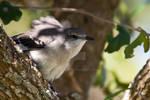 South Texas Bird 5