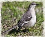 South Texas Bird 6