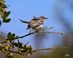 South Texas Bird 7