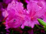 Florida Flowers 2