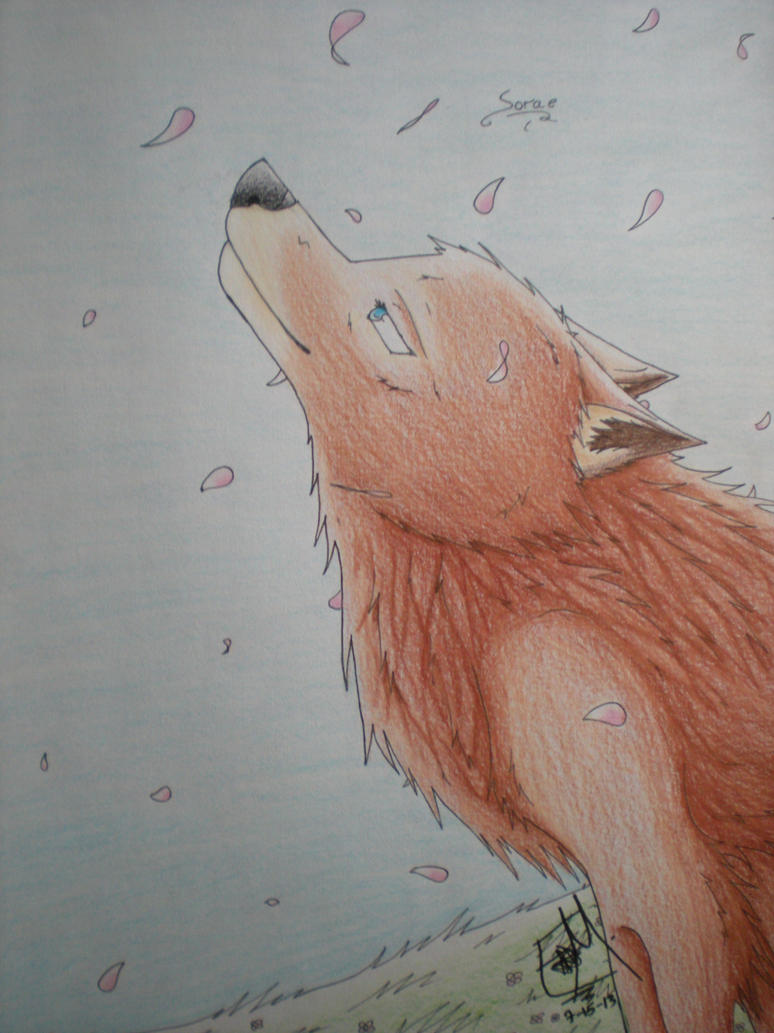 Sorae - Happy Birthday WinterWolf10 by PheonixAurora