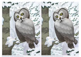 3D Great Grey Owl Crossview by WonderDookie