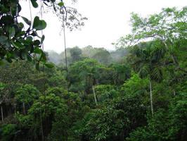Jungle by WonderDookie