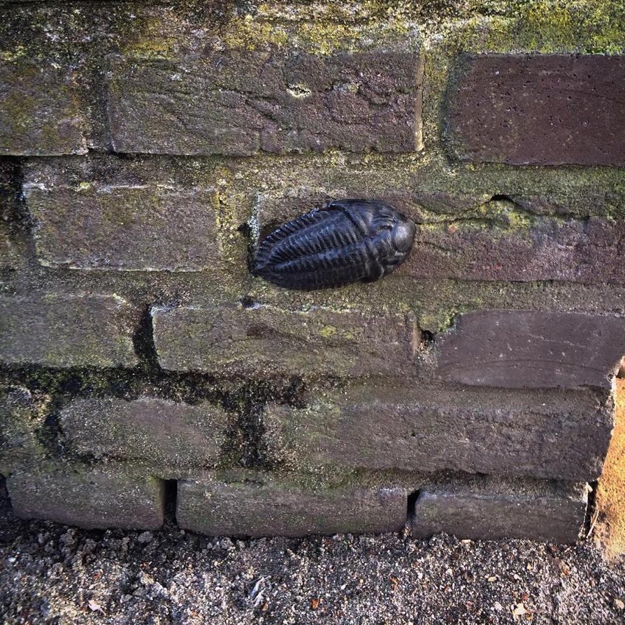 Trilobite street art by jodroboxes