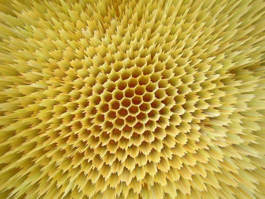Honey Out by jodroboxes