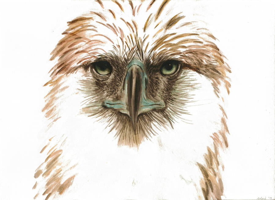 Philippine Eagle by solarisa on DeviantArt