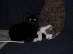 Love of Kittens