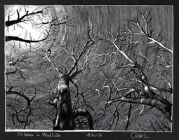 Sycamore trees in moonlight