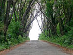 Tree Lined Road 1