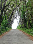 Tree Lined Road 2