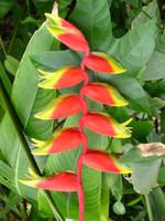 Spiny Alien Plant by Retoucher07030