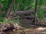 Swampy Woods 3