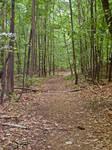 Path Through Woods 3